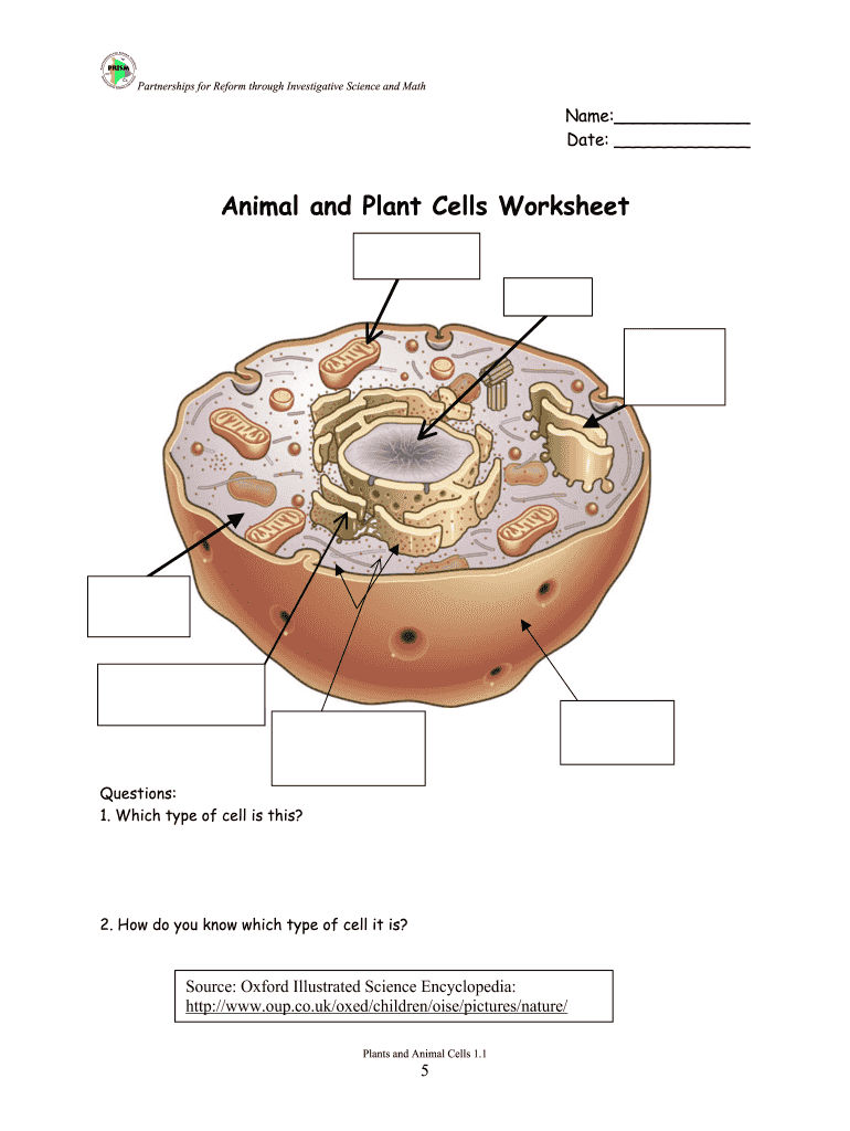 Animal And Plant Cells Worksheet 1 1 Answer Key - Fill Out ...